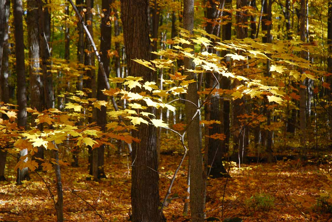 Beautiful Ontario hikes Awenda Provincial Park in the Fall