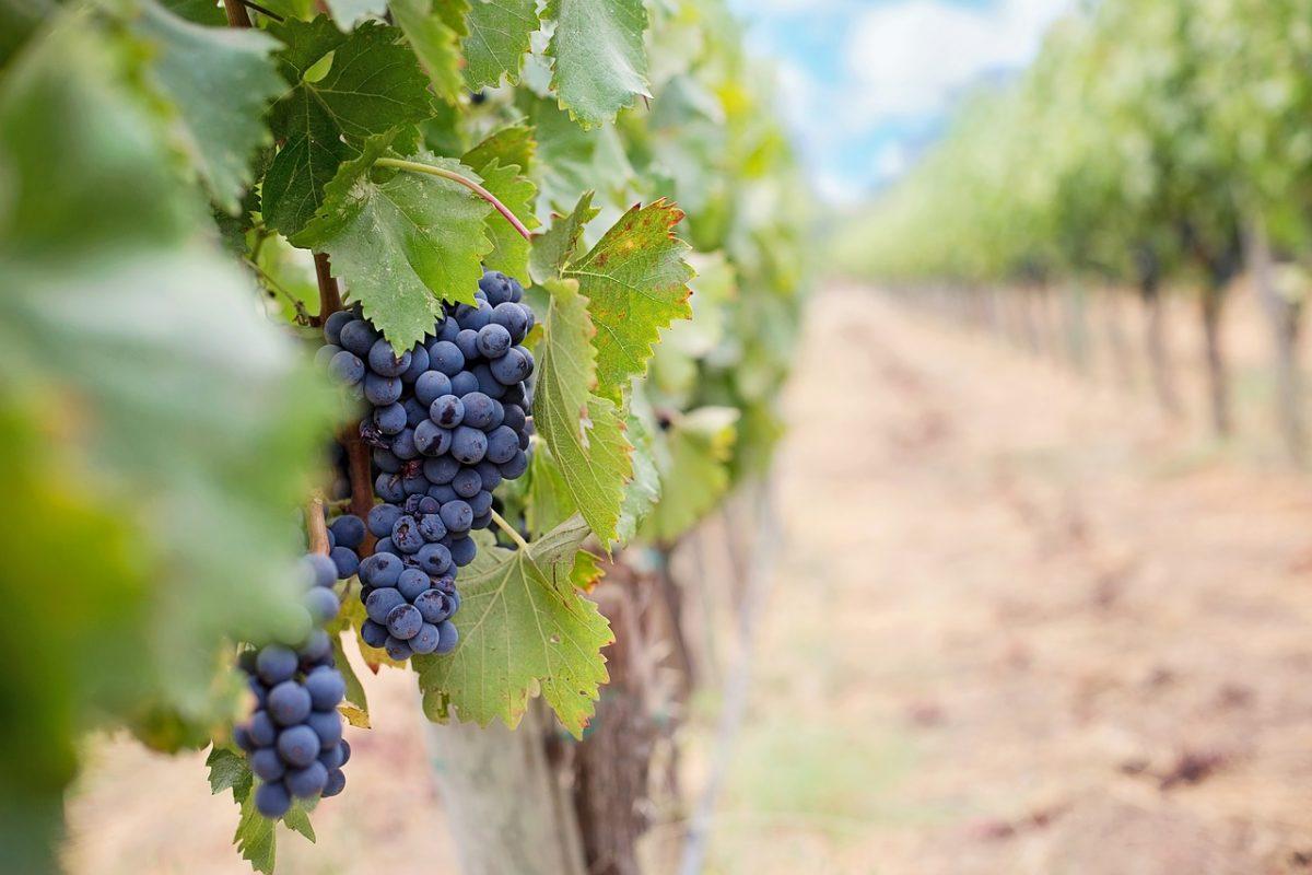 wine delivery to toronto