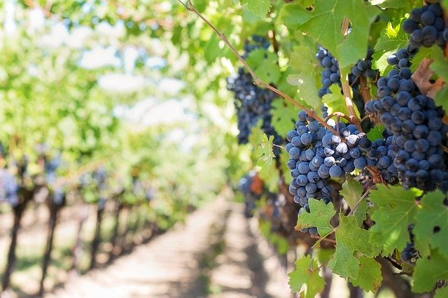 the best wineries in niagara
