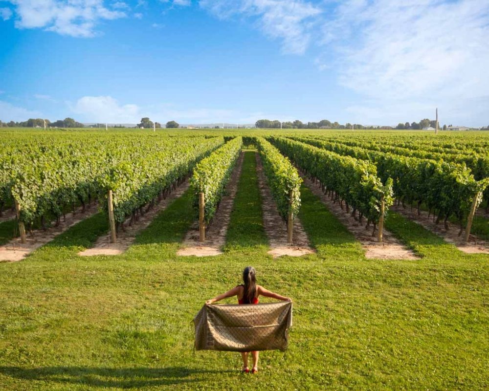 Ontario wine tour staycation tips