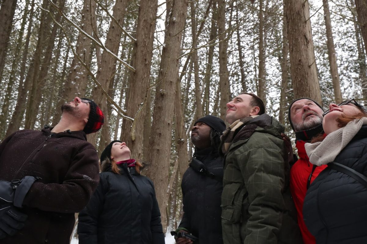 Forest bathing at The Hive Centre and Bee & Bee