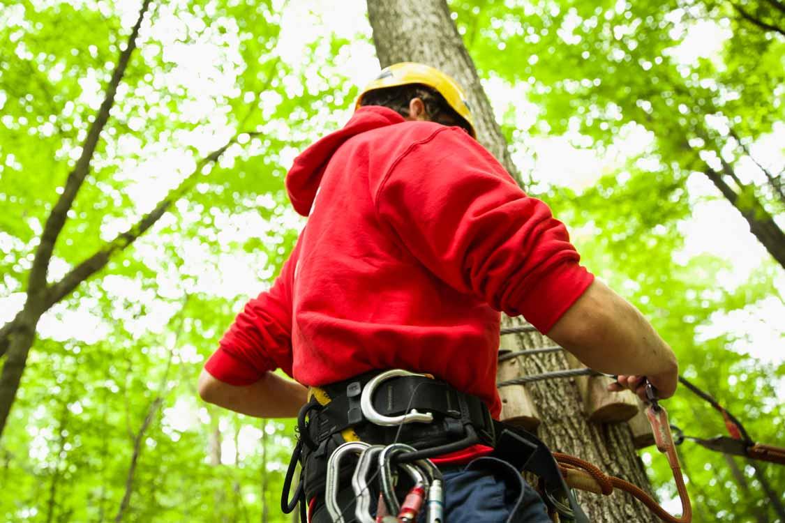 Treetop ziplines in Toronto