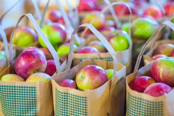 Apple picking in Ottawa, Ontario