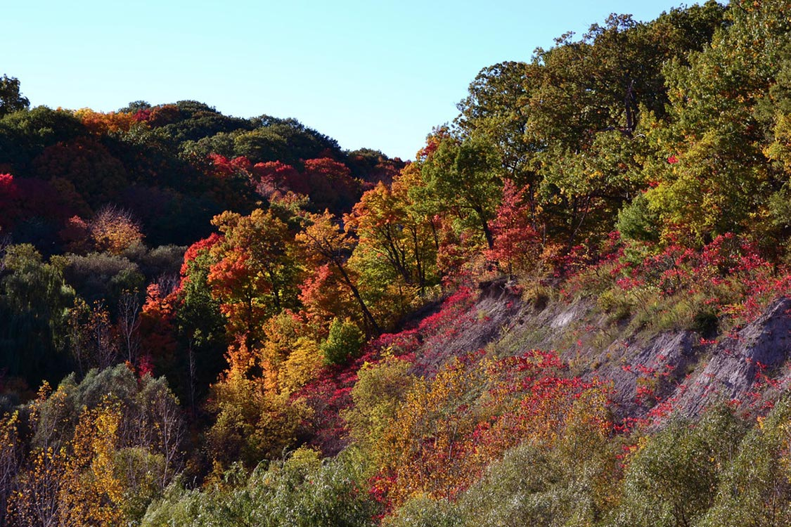 Fall Colours in Toronto Brickworks