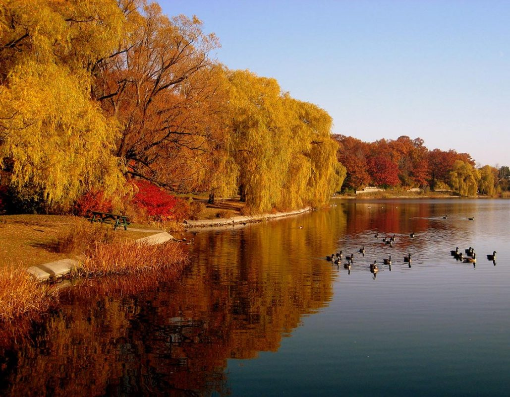 Fall Foliage in High Park Toronto