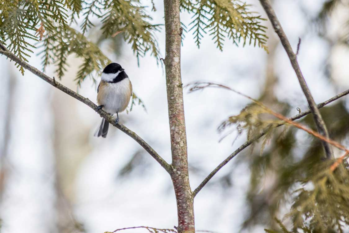 Winter wildlife in Ontario