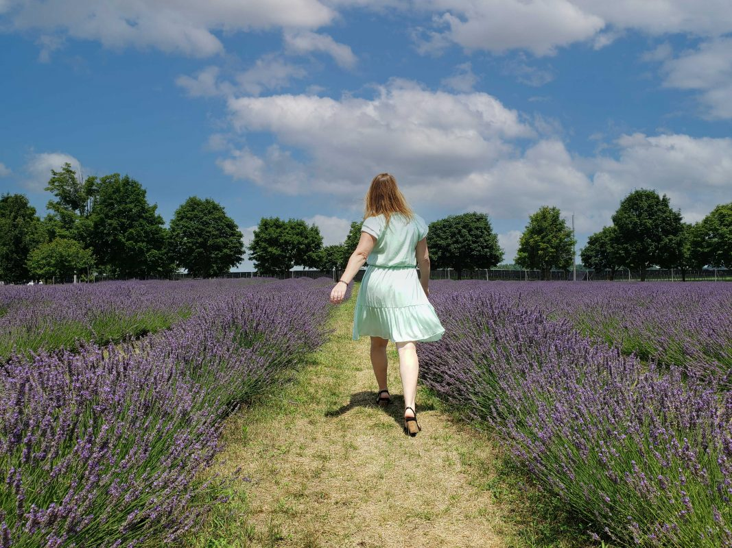 A woman walking through a lavender field at a Norfolk County winery