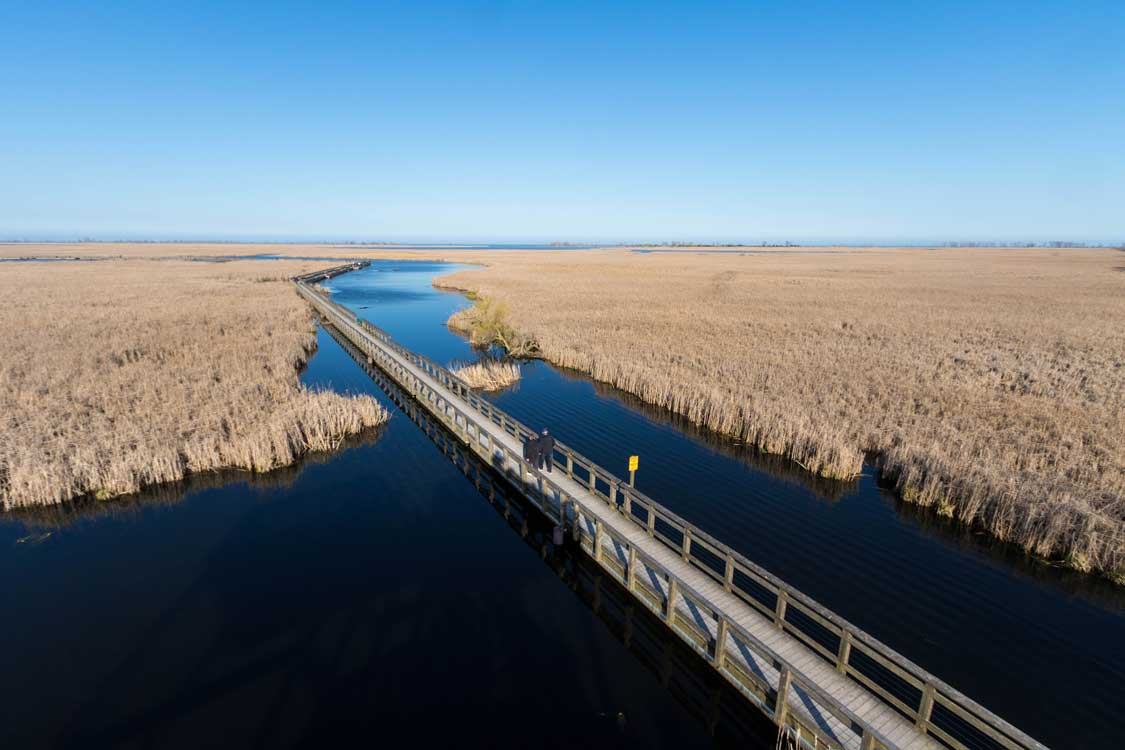 A boardwalk winds through a marsh in Point Pelee National Park