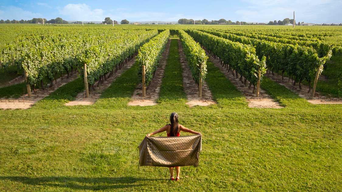 Wine regions of Ontario