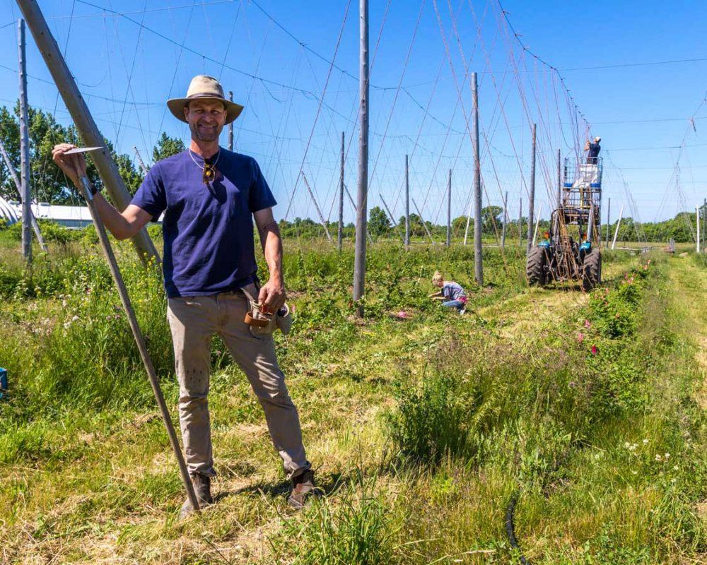 Hop farmer in Prince Edward County