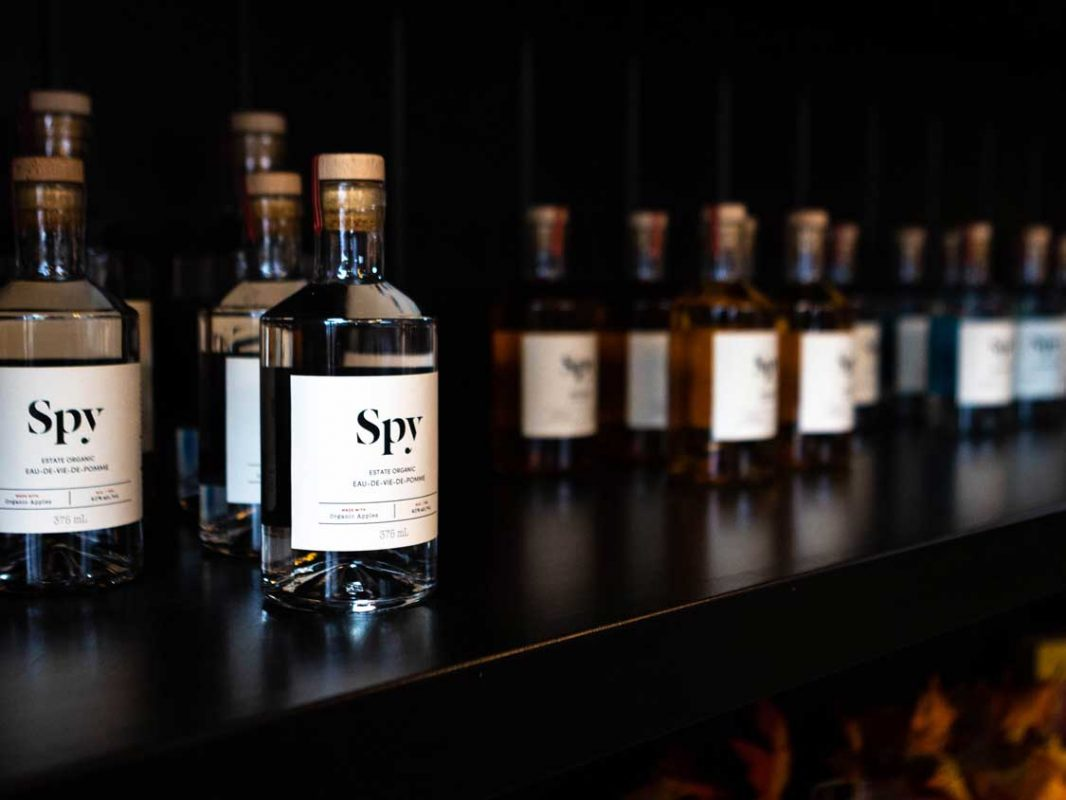 Row of gin bottles against a black background