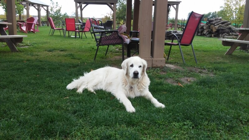 Three Dog Winery in Picton, Ontario